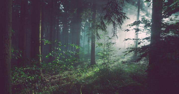 Siete ideas para que tu rutina de belleza esté en armonía con la naturaleza