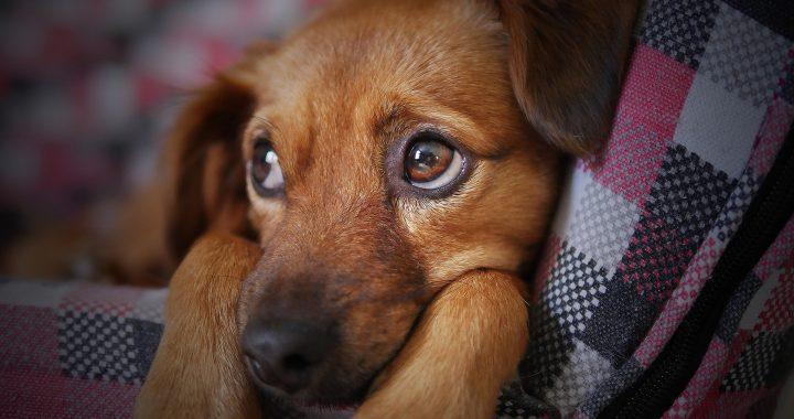 Consejos para rescatar a un perro abandonado