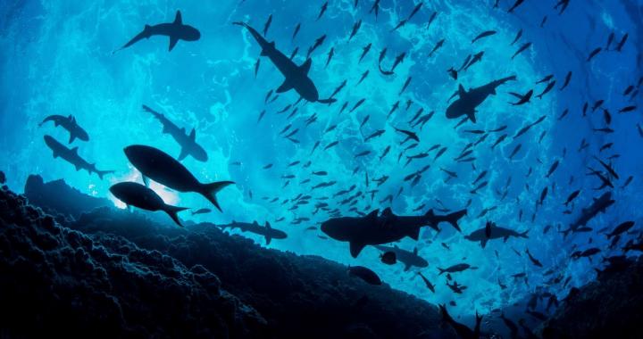 Curiosidades del océano de la manos de exploradores de National Geographic