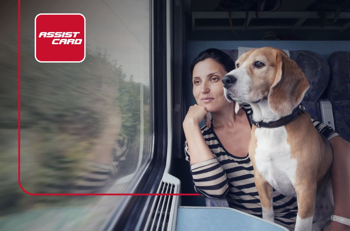 Conoce las mejores recomendaciones para viajar con tu mejor amigo de cuatro patas