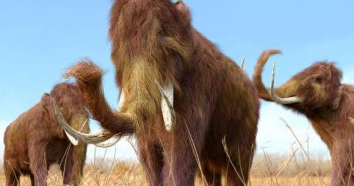 Colossal, empresa de genética, busca resucitar a lo mamuts para «sanar» la Tierra